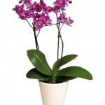 catalina-plant