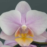 Amaglad-bloem-web