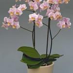 Amaglad-plant-web