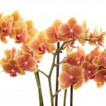 Grazia-bloemtakken-web