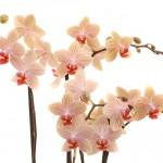 Jamion bloemtakken web