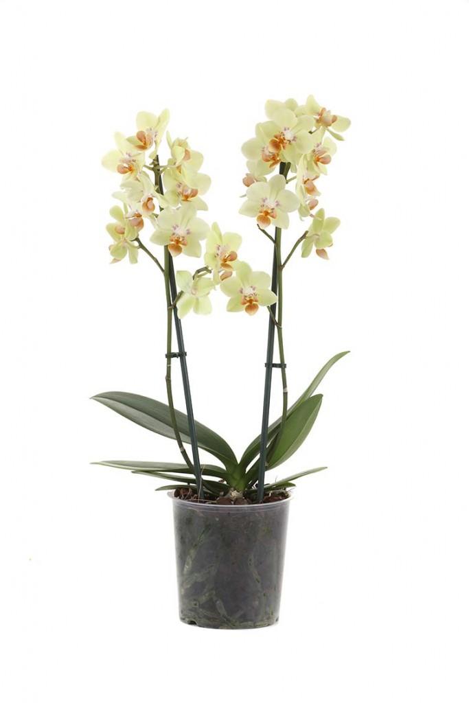 plant1aweb
