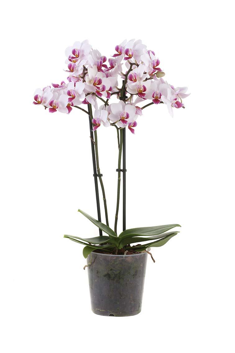 plant4aweb