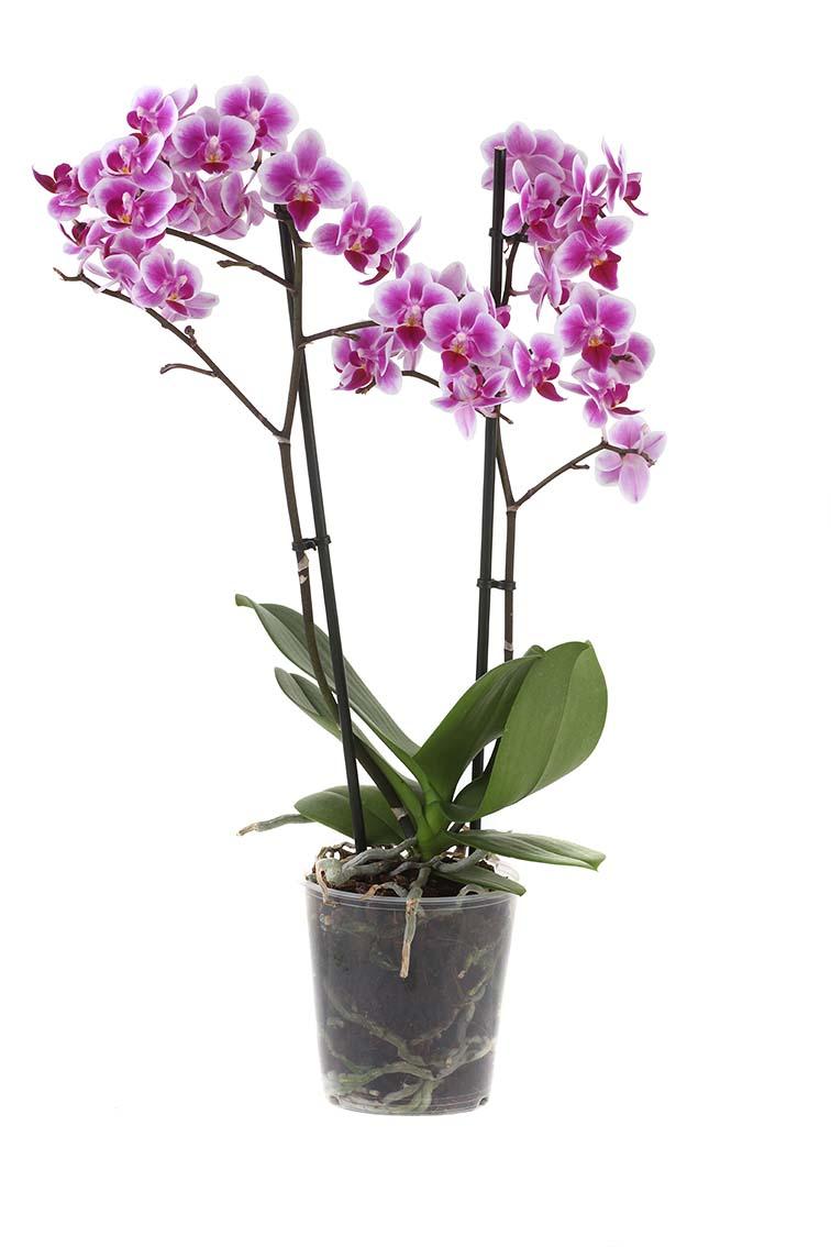 plant6aweb