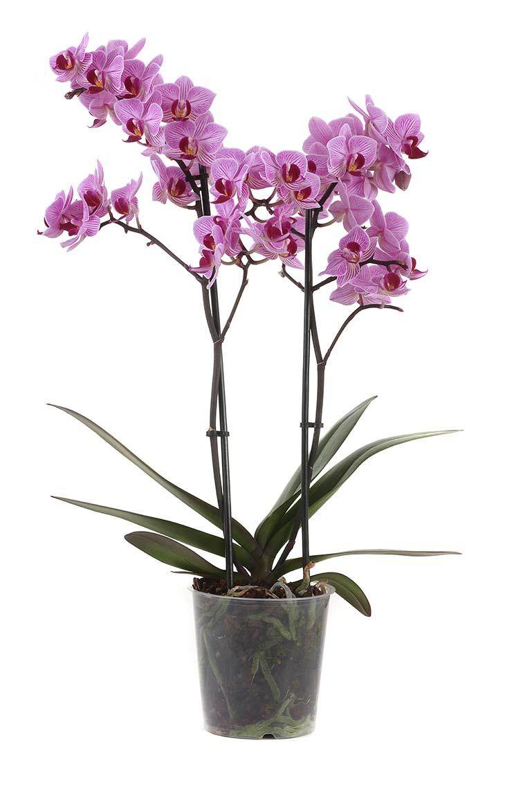 plant7aweb